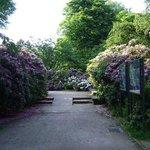 Japanese Garden, Düsseldorf, Alemania.