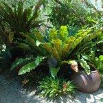 tropical gardens surrounds Blue Ginger Garden Cottage