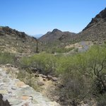 Saguaro Cactus, Desert Plants, Great Views & Trails
