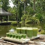 Wheatgrass & Green Juice