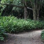 Walkway at Kershaw Gardens