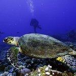 Turtle @ King Abdullah Reef with Aqaba Bedouin Dive