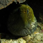 Moray with Aqaba Bedouin Dive
