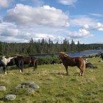 Lunch for hestene også
