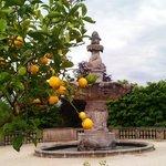 Lemon tree at Kurpark, in front of hotel