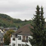 Vinyards in Güls