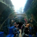 The tunnel above the sea life.