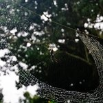 Spider web in the rain