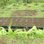 Zonas de cultivo orgánico del hotel Quelitales