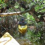 Magic of the Mangroves Kayak Tour