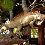 Gerge the Iguana