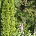 Tall Tree Ravine