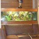 Fish Tank Inside Gazi'z