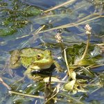 Frog by the sluice gate
