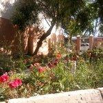 The lovely garden!