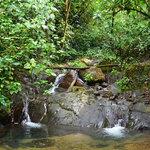 Rio Magnolia Nature Lodge Foto