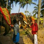 Local Elephant festival