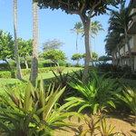Beachboy Garden Area