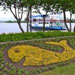 Whale flower arrangement in Couchiching Beach Park
