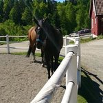 huge horses in the courtyard