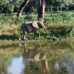 The Mana Pools reflections