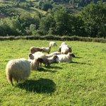beautiful views and sheep