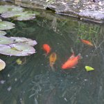 Bootham Gardens pond