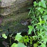 Bootham Gardens wildlife