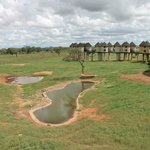 Salt Lick Lodge Taita Hills Safari