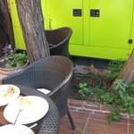 Giardino: gabinetto dei gatti!