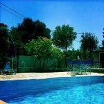 Olive grove Pool area, plenty of sunbeds and a bar