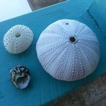 Shells Collected While Snorkeling