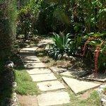 Pathway Through Citronella Grounds