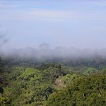 view over the rainforest from canopy walkway