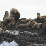 Adventure Tofino - Wildlife Tours