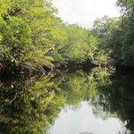 River Mangrove Cruise