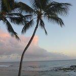 Many palms scattered around property