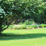 Michelle's vegetable garden