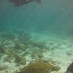 Snorkeling at La Loberia
