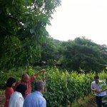 visit of the vineyard