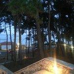 Skala pines to the sea