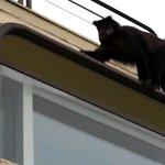 Monkey hanging outside the hotel!