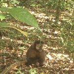 Macaco que é parte de um bando que mora no parque