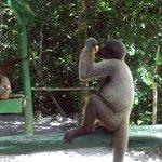 ECOPARK Manaus 10