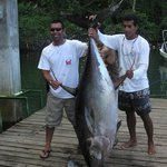 Big 200 lbs yellowfin tuna