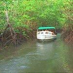 mangroves anyone