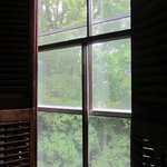 Views from our windows are into the forest nearby.