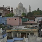 Great view of the Taj Mahal and the local monkey clan