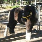 Cute little Snoopi pony