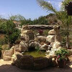 Terrace at the Olive ... the well